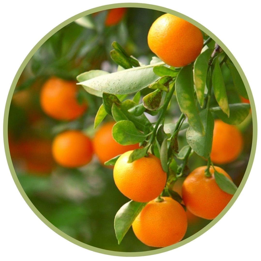 Mandarinka klementinka BIO 5 ml