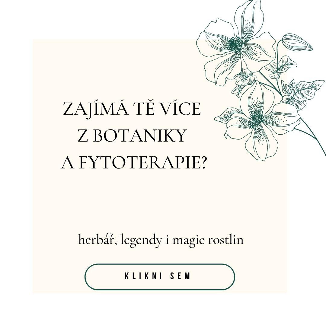 Amyris balsamifera éterický (esenciální) olej BOTANICKÝ PRŮVODCE