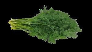 Kopr (z rostliny) BIO 5ml