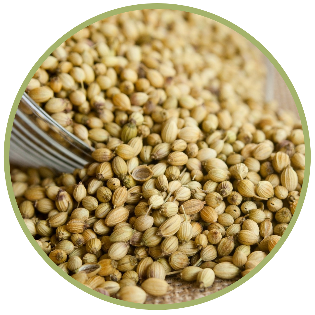 Koriandr (semena) BIO 5 ml