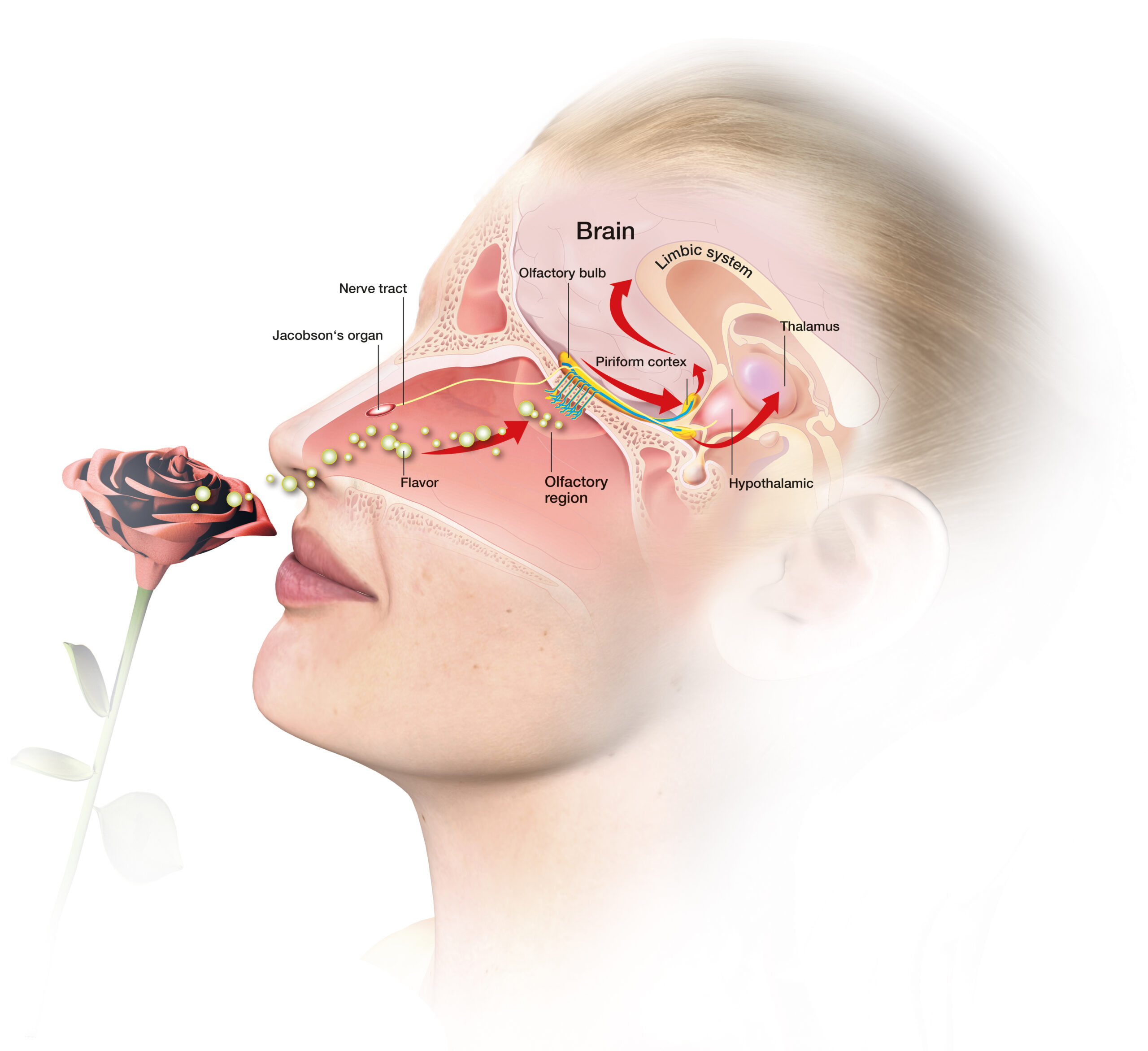 Terapie čicehem - jedna z velmi účinných metod aromaterapie